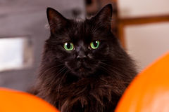 Μαύρη γάτα με τα πράσινα μάτια Στοκ φωτογραφία με δικαίωμα ελεύθερης χρήσης