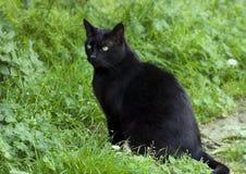 Μαύρη γάτα με τα πράσινα μάτια Στοκ Εικόνες