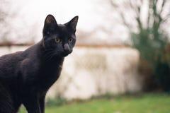 Μαύρη γάτα με τη μεγάλη μύτη στοκ φωτογραφία με δικαίωμα ελεύθερης χρήσης