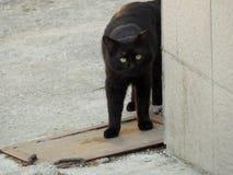 Μαύρη γάτα πίσω από τη γωνία του κτηρίου Στοκ Φωτογραφία