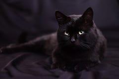 Μαύρη γάτα που βρίσκεται σε ένα μαύρο υπόβαθρο Στοκ Εικόνες