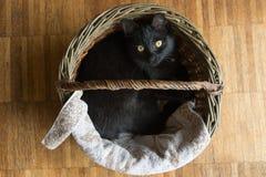 Μαύρη γάτα που βρίσκεται σε ένα ψάθινο καλάθι Στοκ φωτογραφία με δικαίωμα ελεύθερης χρήσης