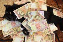 Μαύρη γάτα που βρίσκεται στον τάπητα με τα χρήματα Στοκ Εικόνα