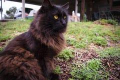 Μαύρη γάτα που κοιτάζει από τη κάμερα Στοκ Φωτογραφίες