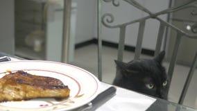 Μαύρη γάτα που προσέχει ένα κομμάτι του κρέατος στον πίνακα κουζινών απόθεμα βίντεο