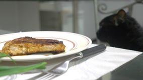 Μαύρη γάτα που προσέχει ένα κομμάτι του κρέατος στον πίνακα κουζινών φιλμ μικρού μήκους