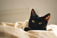 Μαύρη γάτα σε ένα κρεβάτι στοκ φωτογραφία με δικαίωμα ελεύθερης χρήσης