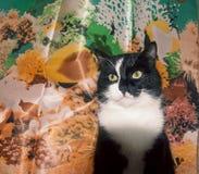 Μαύρη γάτα σε ένα υπόβαθρο μιας κουρτίνας χρώματος Στοκ Φωτογραφία