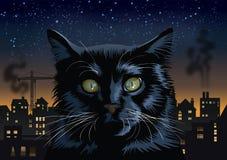 Μαύρη γάτα στην πόλη τη νύχτα Στοκ εικόνα με δικαίωμα ελεύθερης χρήσης
