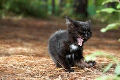 Μαύρη γάτα στη φυσική ανασκόπηση Στοκ φωτογραφία με δικαίωμα ελεύθερης χρήσης