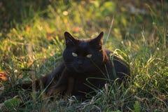 Μαύρη γάτα στον κήπο στοκ εικόνα