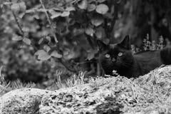 Μαύρη γάτα στον κήπο Στοκ Εικόνες