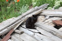 Μαύρη γάτα στο ξύλο σιταποθηκών στοκ εικόνα με δικαίωμα ελεύθερης χρήσης