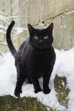 Μαύρη γάτα στο χιόνι στοκ εικόνα με δικαίωμα ελεύθερης χρήσης