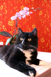 Μαύρη γάτα στο δωμάτιο με την κόκκινη ταπετσαρία Στοκ φωτογραφία με δικαίωμα ελεύθερης χρήσης