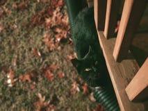 Μαύρη γάτα το φθινόπωρο με τα πράσινα μάτια αισθητικά στοκ εικόνες