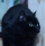 μαύρη γάτα χαριτωμένη Στοκ φωτογραφίες με δικαίωμα ελεύθερης χρήσης