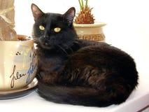 μαύρη γάτα Στοκ Εικόνα