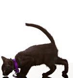 μαύρη γάτα Στοκ εικόνα με δικαίωμα ελεύθερης χρήσης