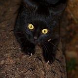μαύρη γάτα Στοκ εικόνες με δικαίωμα ελεύθερης χρήσης