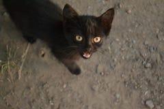 μαύρη γάτα Στοκ φωτογραφία με δικαίωμα ελεύθερης χρήσης
