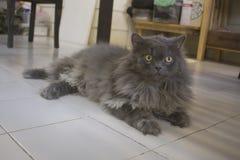 μαύρη γάτα Στοκ Φωτογραφίες