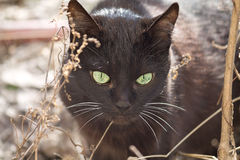 μαύρη γάτα Στοκ Εικόνες