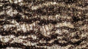 Μαύρη γκρίζα σύσταση φλοιών δέντρων στοκ φωτογραφία με δικαίωμα ελεύθερης χρήσης