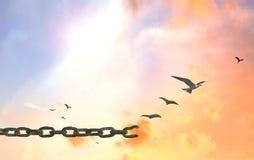 μαύρη ελευθερία έννοιας που απομονώνεται Στοκ Φωτογραφία