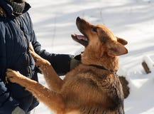 Μαύρη και κόκκινη μιγάς στάση σκυλιών Στοκ φωτογραφία με δικαίωμα ελεύθερης χρήσης