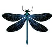 Μαύρη και μπλε λιβελλούλη-λιβελλούλη ελεύθερη απεικόνιση δικαιώματος