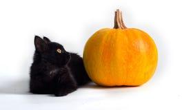 μαύρη κολοκύθα γατών στοκ φωτογραφίες
