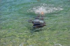 Μαύρη κολύμβηση αγοριών υποβρύχια Στοκ εικόνα με δικαίωμα ελεύθερης χρήσης