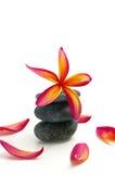 μαύρη κόκκινη πέτρα plumeria Στοκ φωτογραφία με δικαίωμα ελεύθερης χρήσης