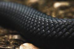 Μαύρη μακροεντολή δερμάτων φιδιών Στοκ εικόνες με δικαίωμα ελεύθερης χρήσης