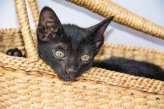 Μαύρη νέα γάτα στο υπόβαθρο καλαθιών Στοκ εικόνες με δικαίωμα ελεύθερης χρήσης
