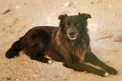 μαύρη οδός σκυλιών Στοκ εικόνα με δικαίωμα ελεύθερης χρήσης