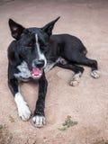μαύρη οδός σκυλιών Στοκ εικόνες με δικαίωμα ελεύθερης χρήσης