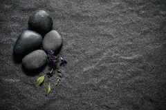 Μαύρη πέτρα με το πράσινο φύλλο και smallthe το χαριτωμένο πορφυρό Δεκέμβριο λουλουδιών Στοκ φωτογραφία με δικαίωμα ελεύθερης χρήσης