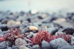 Μαύρη πέτρα στην παραλία, πέτρα υποβάθρου, στο νησί Tenerife Ισπανία στοκ εικόνες
