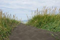 Μαύρη παραλία στην Ισλανδία με τη χλόη στοκ εικόνα