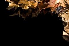 μαύρη σειρά αποκριών Στοκ Εικόνες