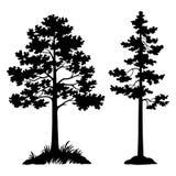 Μαύρη σκιαγραφία δέντρων πεύκων Στοκ Εικόνα