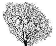 μαύρη σκιαγραφία κοραλλ&io Στοκ φωτογραφία με δικαίωμα ελεύθερης χρήσης
