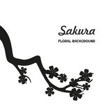 Μαύρη σκιαγραφία του sakura σε ένα άσπρο υπόβαθρο Στοκ φωτογραφία με δικαίωμα ελεύθερης χρήσης