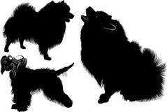 Μαύρη σκιαγραφία spitz διάνυσμα η ανασκόπηση απομόνωσε το λευκό Spitz σκυλί Κινεζικό λοφιοφόρο σκυλί σκυλιά κινεζικός λοφιοφόρος  Στοκ φωτογραφίες με δικαίωμα ελεύθερης χρήσης