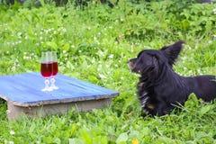 Μαύρη συνεδρίαση σκυλιών σε πράσινη χλόη και δύο γυαλιά με το σπιτικό κρασί στους μπλε πίνακες υπαίθρια στην επαρχία στο καλοκαίρ Στοκ Εικόνες