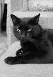 Μαύρη συνεδρίαση γατών σε ένα βήμα Στοκ φωτογραφίες με δικαίωμα ελεύθερης χρήσης