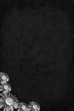 μαύρη σύσταση Στοκ Εικόνα