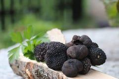μαύρη τρούφα Στοκ Φωτογραφία